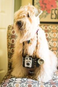 Molly camera-2