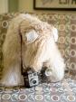 Molly camera-3